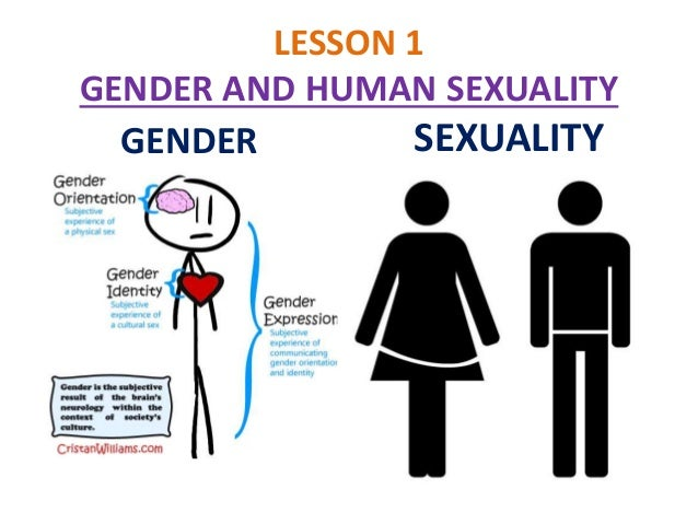 Gender differences in human sexuality