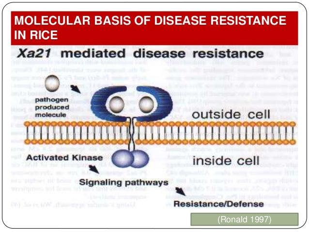 Gene for-gene hypothesis & its validty in the present scenario