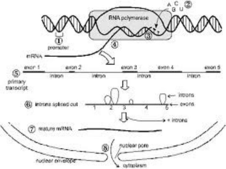 Gene and genetic code monday may 9 2011 ccuart Choice Image