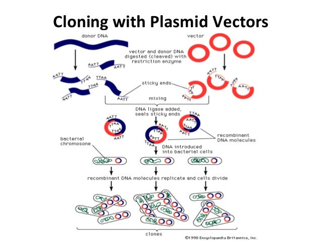cloning notes There were lots of exciting scientific tidbits this week, but two stories really stood  out the news of the first primates born using the same cloning.
