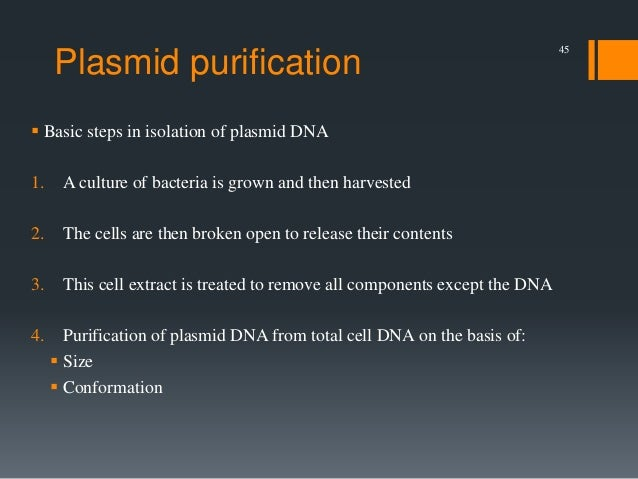isolation cloning and translation of plasmid dna Gene cloning and dna and more on dna isolation methods may vary depending on the type or nature of how much dna template (genomic or plasmid dna.