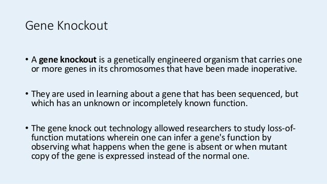 Gene knockout animal models