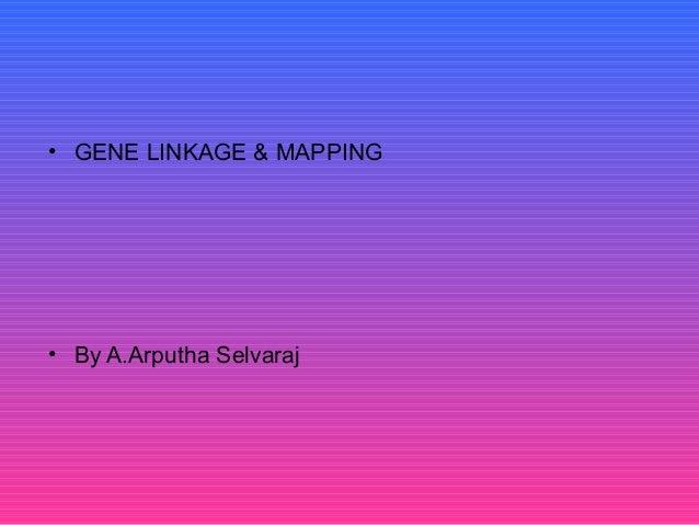 • GENE LINKAGE & MAPPING • By A.Arputha Selvaraj