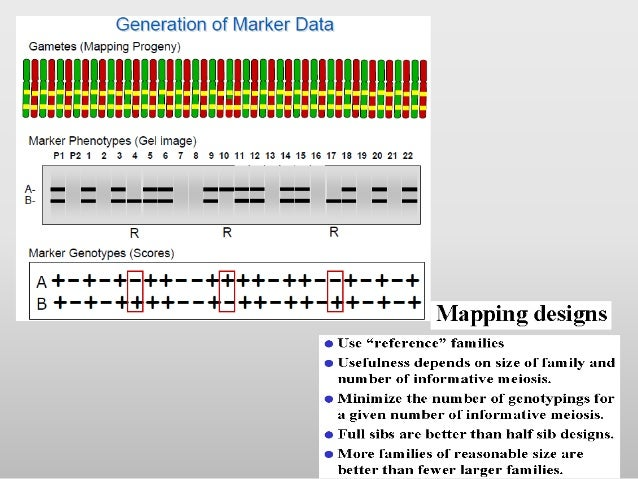 Gene mapping on