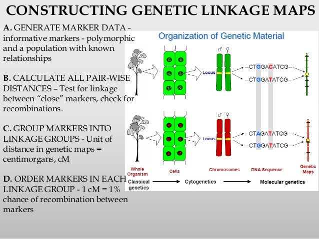 Gene mapping on automation test, genetic pedigree, brain mapping test, protein test,