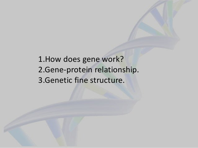 1.How does gene work? 2.Gene-protein relationship. 3.Genetic fine structure.