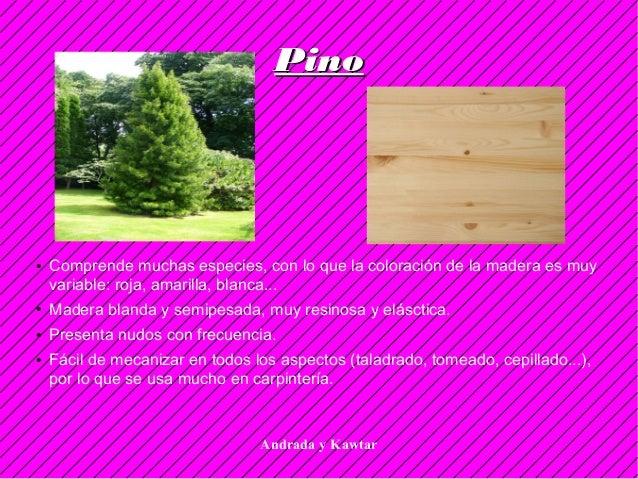 Andrada y Kawtar PinoPino ● Comprende muchas especies, con lo que la coloración de la madera es muy variable: roja, amaril...