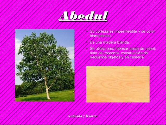 Andrada y Kawtar AbedulAbedul ● Su corteza es impermeable y de color blanquecino. ● Es una madera blanda. ● Se utiliza par...