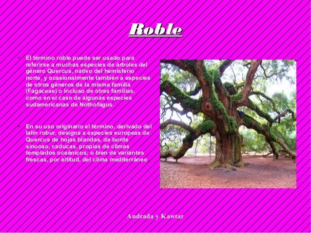 Andrada y Kawtar ● El término roble puede ser usado para referirse a muchas especies de árboles del género Quercus, nativo...