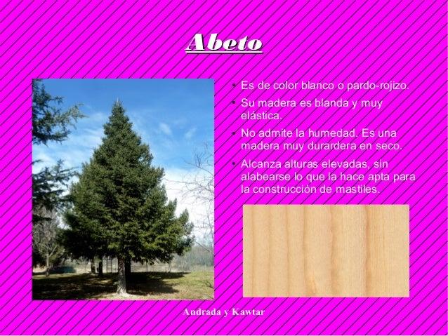 Andrada y Kawtar AbetoAbeto ● Es de color blanco o pardo-rojizo. ● Su madera es blanda y muy elástica. ● No admite la hume...