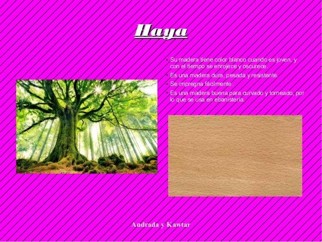 Andrada y Kawtar HayaHaya ● Su madera tiene color blanco cuando es joven, y con el tiempo se enrojece y oscurece. ● Es una...