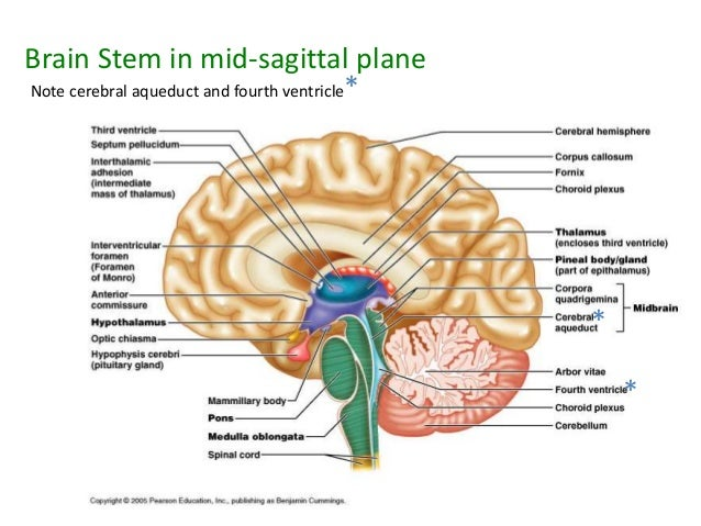 Diagram of cerebral aqueduct wiring diagram general anatomy 19 b rh slideshare net brain anatomy cerebral aqueduct cerebellum diagram ccuart Choice Image