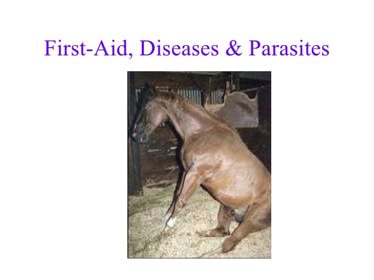 First-Aid, Diseases & Parasites