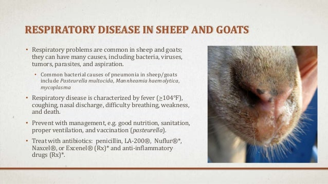 General Health Problems of Sheep/Goats