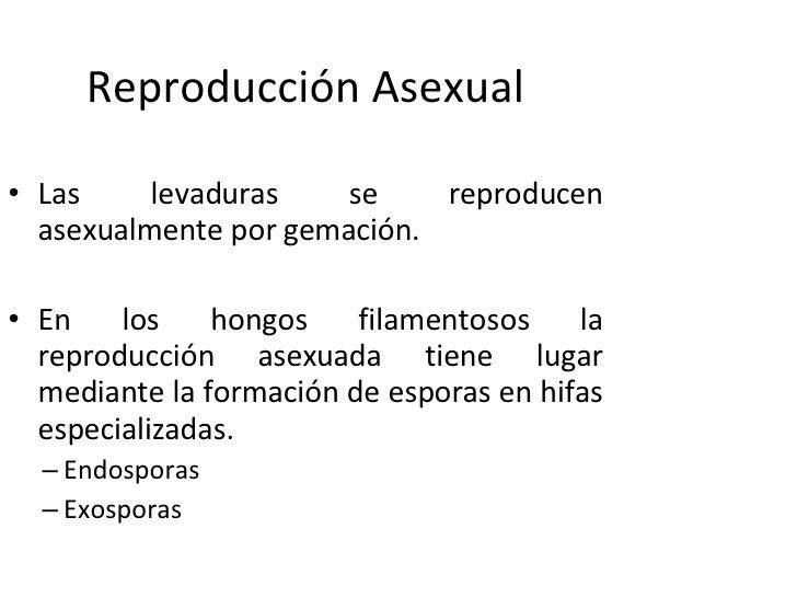 Reproduccion de levaduras asexual