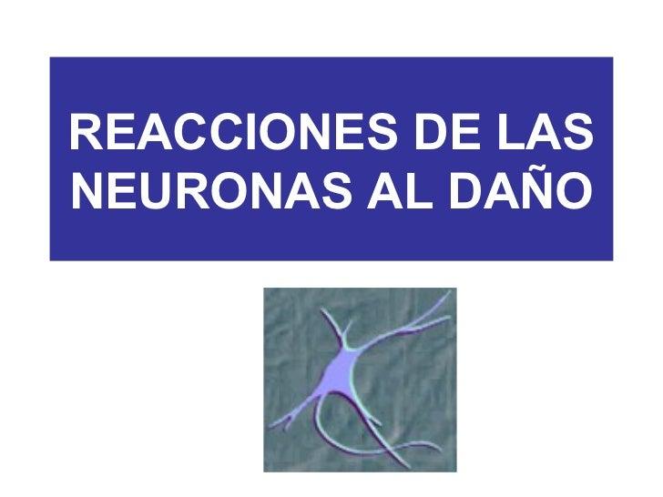 REACCIONES DE LASNEURONAS AL DAÑO