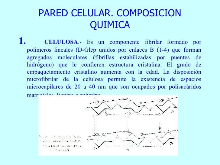 Generalidades La Celula Vegetal