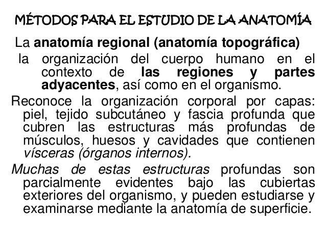 Generalidades anatomía humana