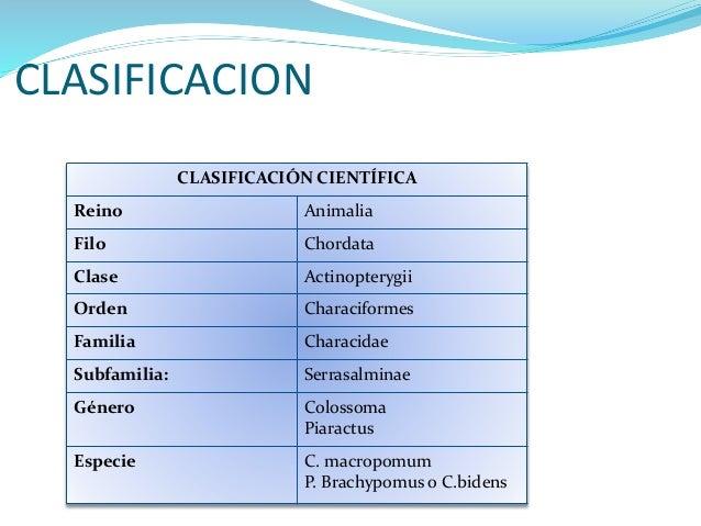 Generalidades cachama for Pez cachama