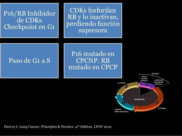 •35% CPCP •22% CPCNP Alteraciones microsatelitales Harvey I. Lung Cancer: Principles & Practice. 4th Edition, LWW 2010.