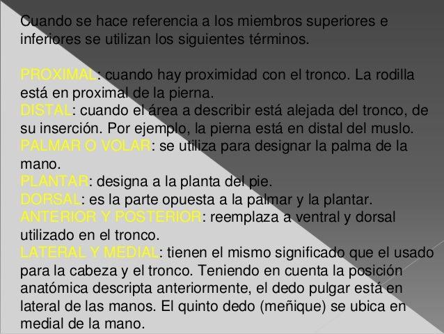 Generalidades de anatomia 1.ppt