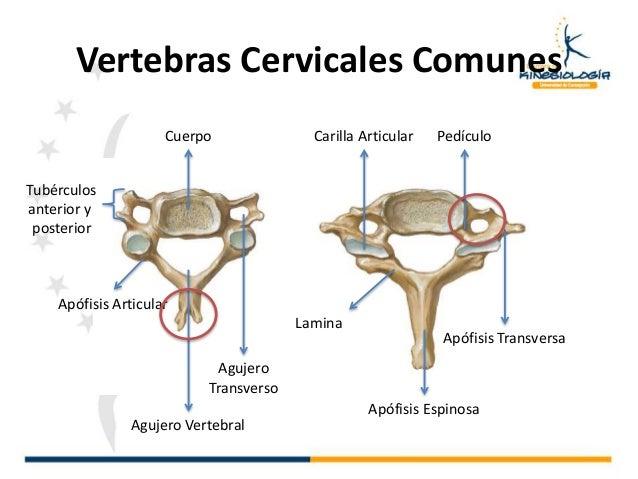 Generalidades de anatomia y osteología :)