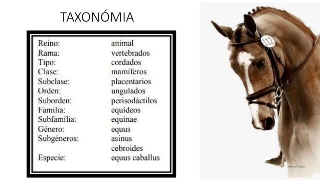 Equinos - Historia, clasificación, y razas. (generalidades)