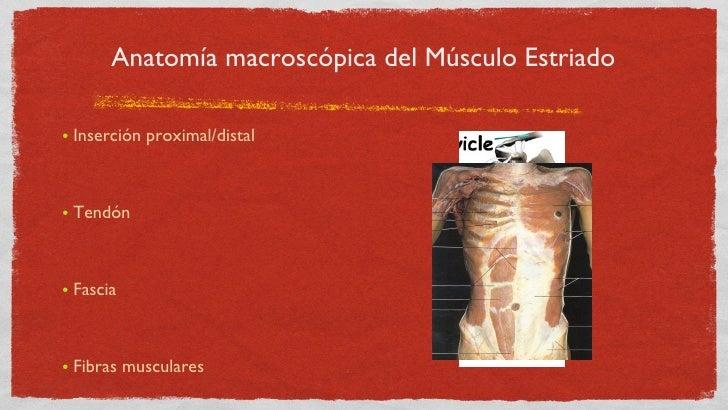 Generalidades del sistema muscular y contracción