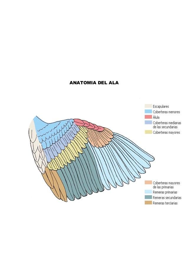 Generalidades en aviculturura