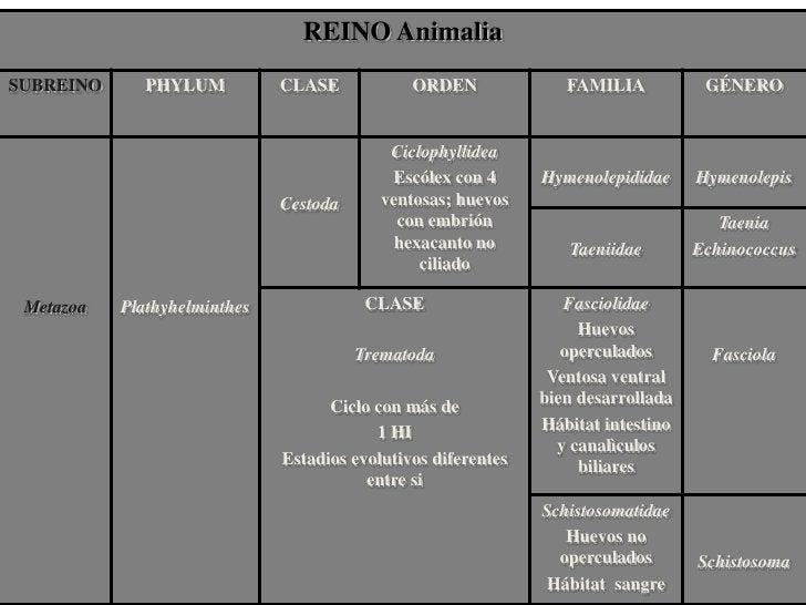 Clasificación de helmintos<br />Plathelmintos:  planos, acelomados (sin cavidad gral)<br /><ul><li>Cestodes