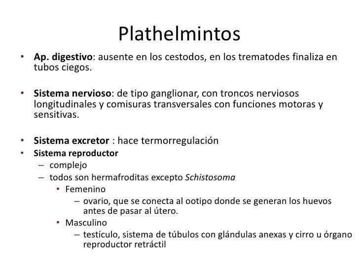 Trematodes</li></ul>Nematodos: redondos, con organización interna propia de animales, pseudocelomados.<br />