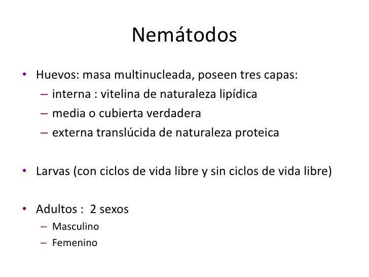 Tremátodos<br />Huevos:  operculados no embrionados.<br />Miracidio: embrión ciliado.<br />Esporocisto y redias: se desarr...