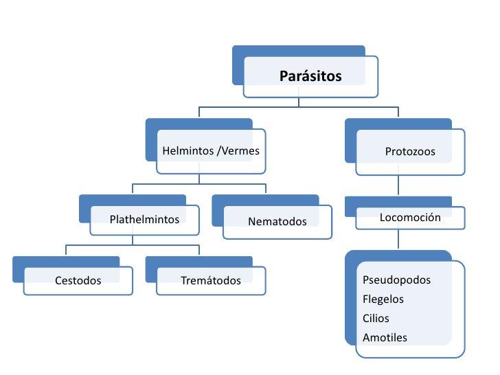 Parasitosis intestinal<br />PROTOZOOS<br />Amebiasis<br />Giardiasis<br />Balantidiasis<br />Criptosporidiasis<br />Ciclos...