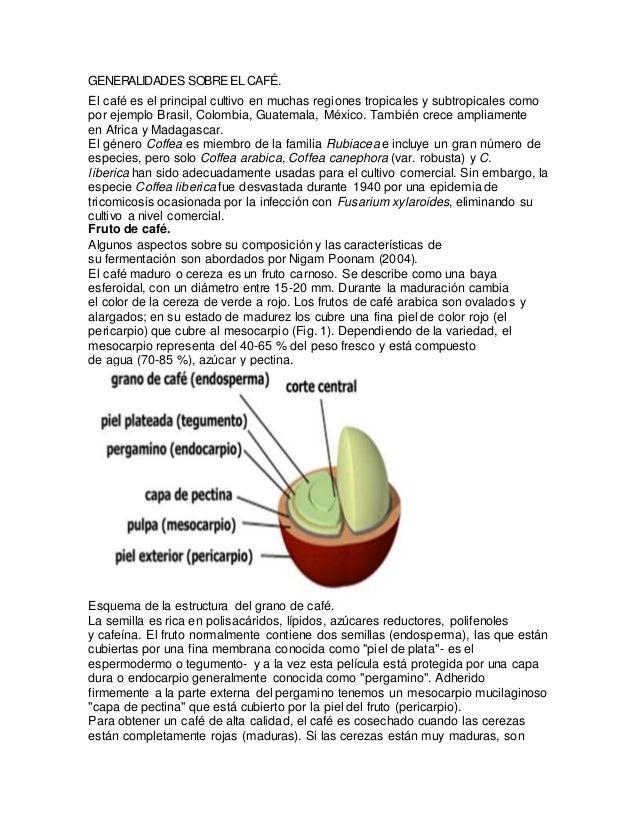 GENERALIDADES SOBREEL CAFÉ. El café es el principal cultivo en muchas regiones tropicales y subtropicales como por ejemplo...