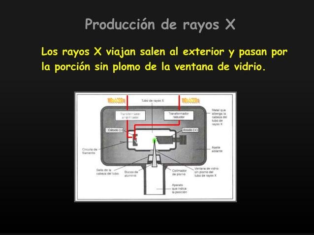 Los rayos X viajan salen al exterior y pasan por la porción sin plomo de la ventana de vidrio. Producción de rayos X