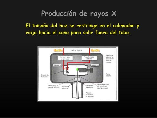 El tamaño del haz se restringe en el colimador y viaja hacia el cono para salir fuera del tubo. Producción de rayos X