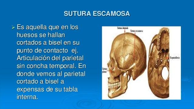 Generalidaes de anatomia