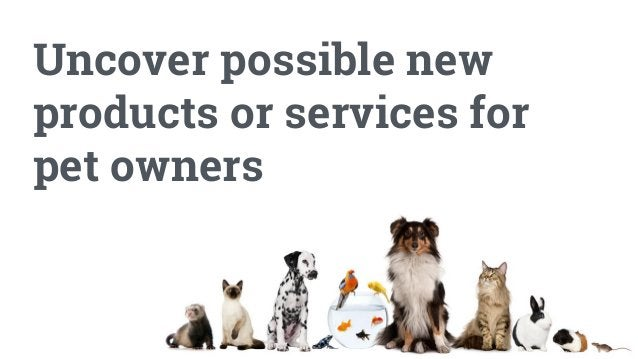 You will research: The emotional range and hidden nuances of the relationship between owners and their pets