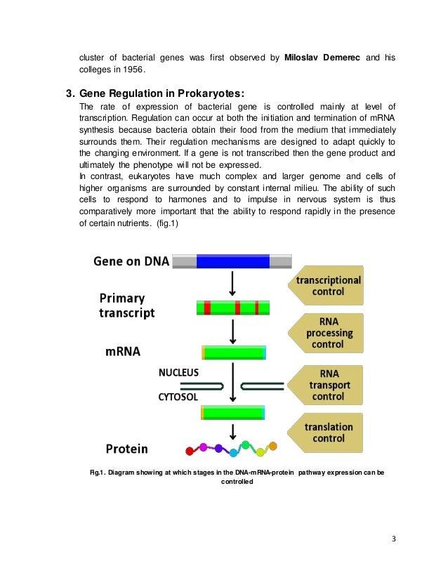 gene regulation in prokaryotes pdf