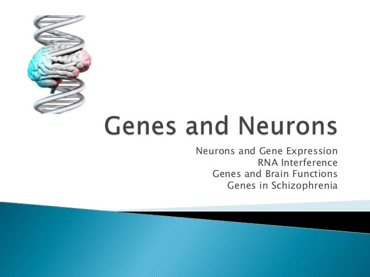 Neurons and Gene Expression            RNA Interference   Genes and Brain Functions     Genes in Schizophrenia