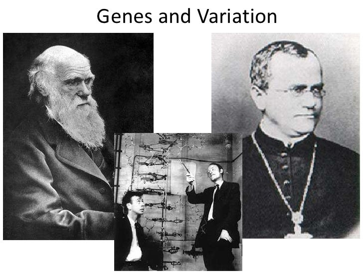 Genes and Variation<br />