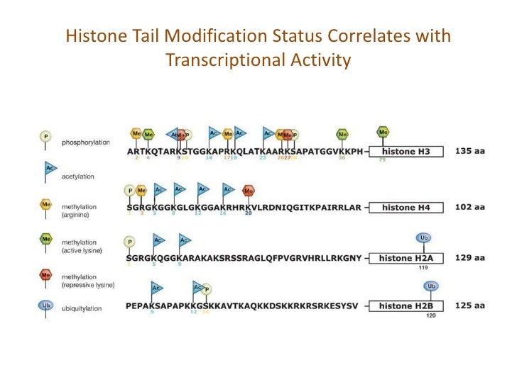 Gene Silencing by Histone Modification