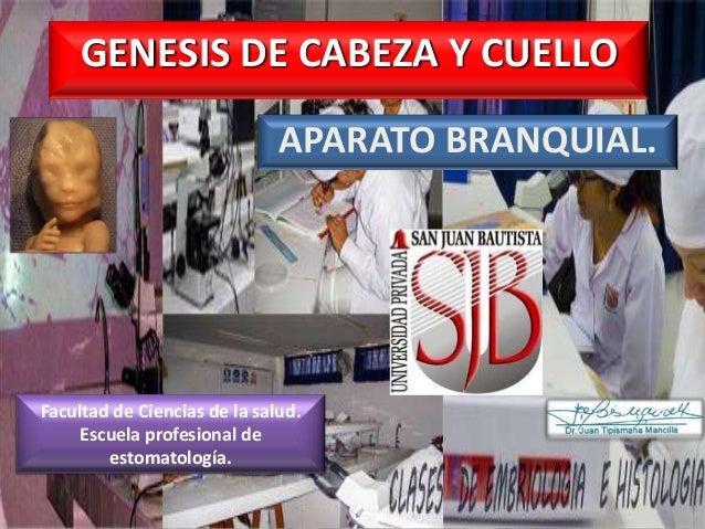 GENESIS DE CABEZA Y CUELLO APARATO BRANQUIAL.  Facultad de Ciencias de la salud. Escuela profesional de estomatología.