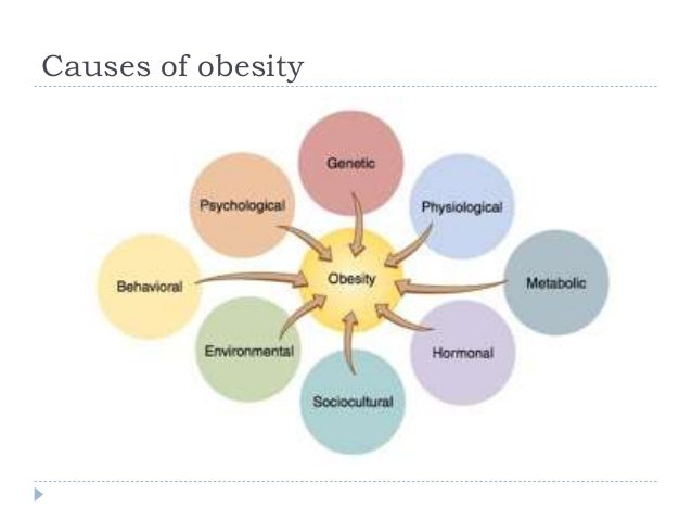 causes of obesity 3 essay
