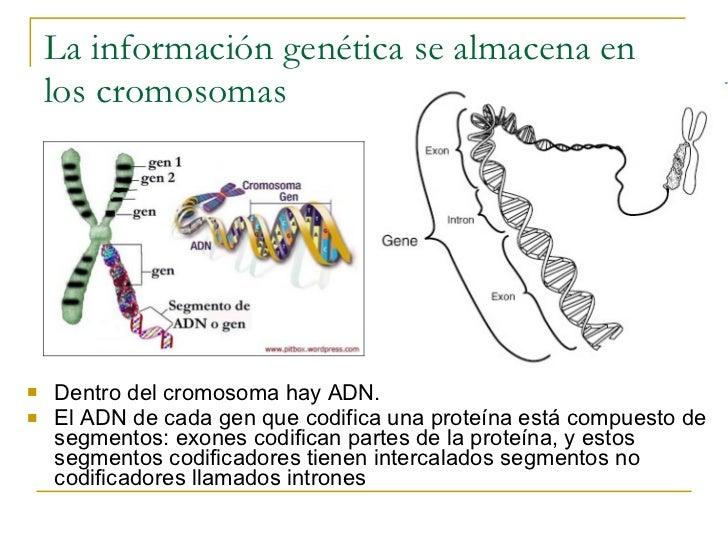 Resultado de imagen de La información de los genes