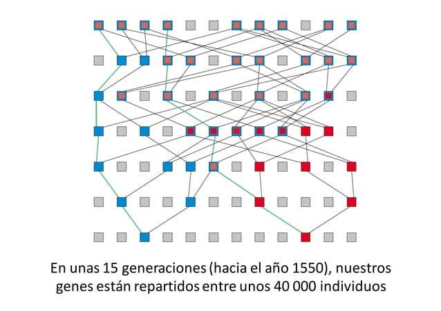 Algunos  rasgos   genéticos  y  culturales  se   mantienen  en  el  tiempo:   cromosoma  Y  y leng...