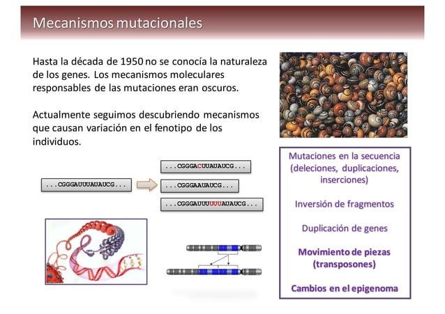 Distribución  del  apellido  Gilabert…  y  del  cromosoma  Y  asociado
