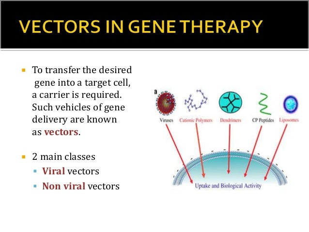 2) ADENO VIRUS VECTOR SYSTEM  Adeno virus with a DNA genome – good vectors.  Target- non dividing human cell.  Eg. Comm...