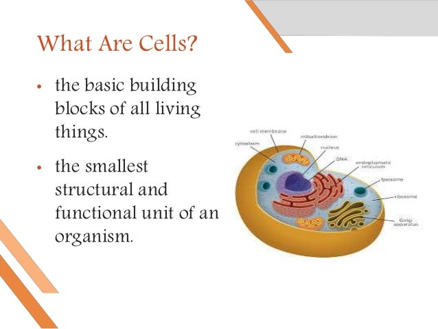 Gene therapy: How does it work. Slide 3