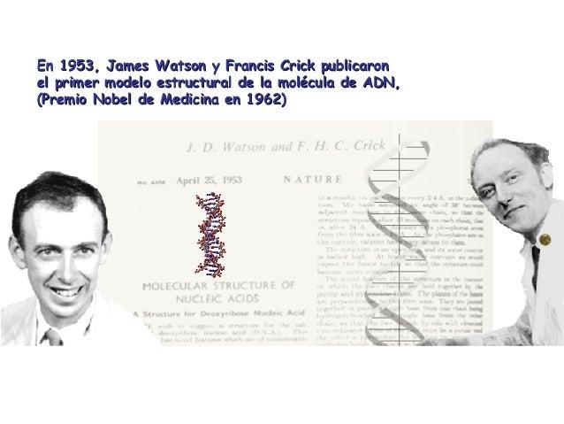 En 1953, James Watson y Francis Crick publicaronEn 1953, James Watson y Francis Crick publicaron el primer modelo estructu...